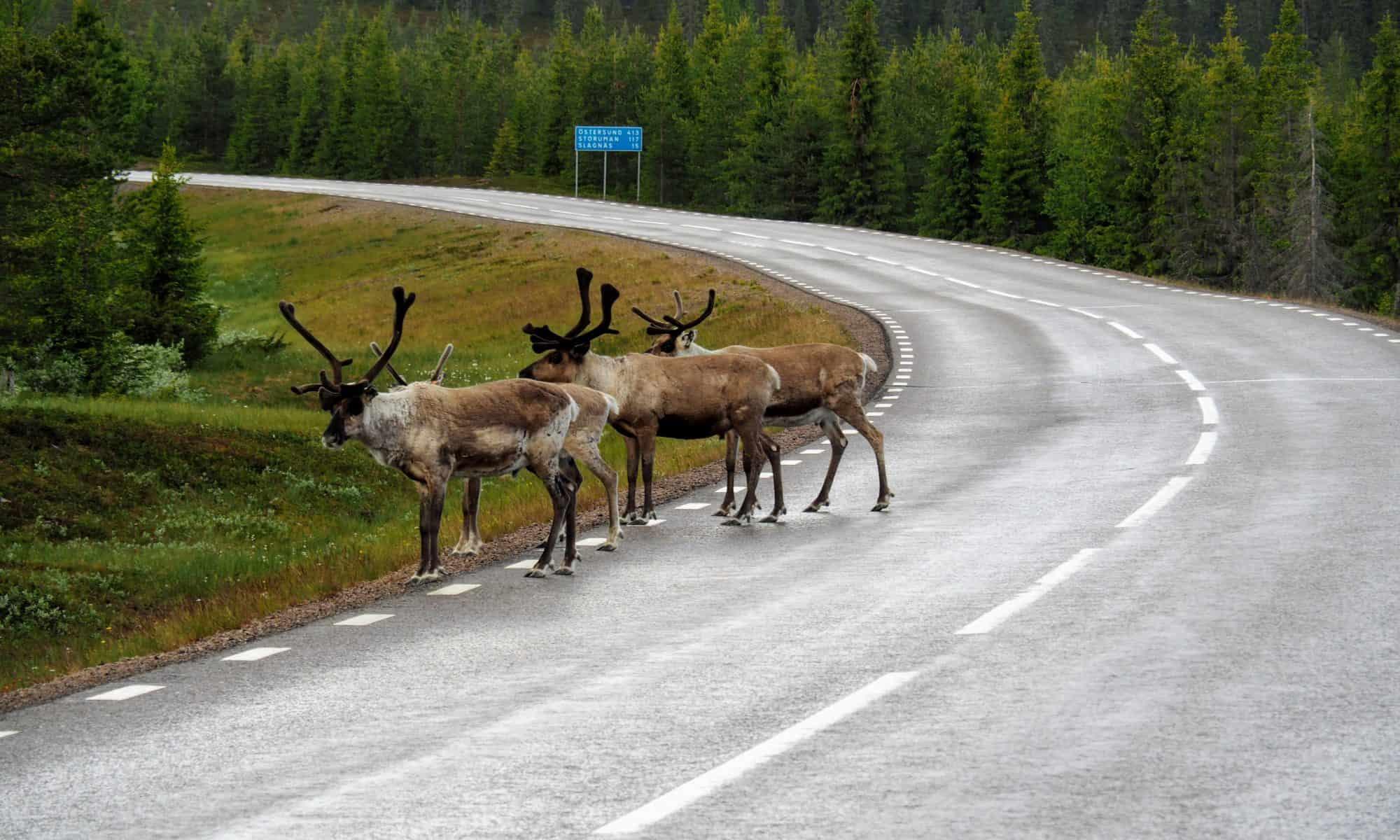 ecotourism swedish lapland